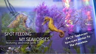 Download FEEDING MY SEAHORSES (Plus Seahorse Facts) Video