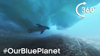 Download 360° Diving Under Icebergs With A Seal In Antarctica #OurBluePlanet – BBC Earth Video