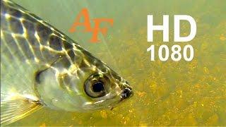 Download Fishing Video Jungle Tarpon Catching Tarpon a Cool Jumping Fish Andysfishing EP.97 Video