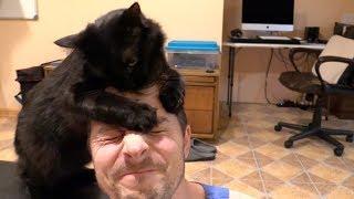 Download Adopt a Tiny BLACK PANTHER! Video