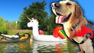 Download DOG RIDES GIANT UNICORN FLOAT TO PRIVATE ISLAND Video