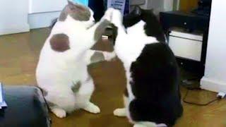 Download 映っているみたい!ミラーキャット/キリン「午後の癒しの動物園」動画6 Video
