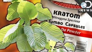 Download WTF Is Kratom & Is It A Dangerous Drug? Video