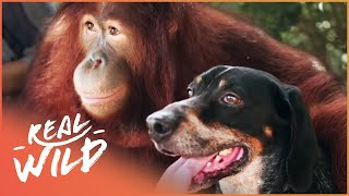 Download Oddest Friendships Between Animals | Animal Odd Couples | Real Wild Video