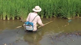 Download Fishing with Electricity in Vietnam WTF? Video