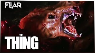 Download The Thing Dog Transformation | The Thing (1982) Video
