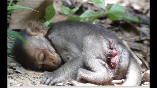 Download Why mommy leave Milto a lone? Poor baby monkey Milto hungry milk Video
