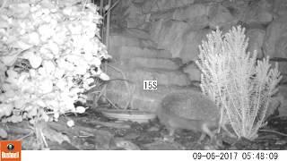 Download Hedgehog Street: stairway to hedgehog heaven Video
