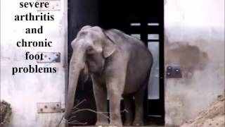Download Retire Ruth from Buttonwood Park Zoo to The Elephant Sanctuary Video