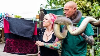 Download Reptile Lovers Live With 80 Snakes Video