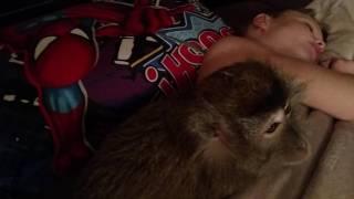 Download My UnMotivated Monkeys Video