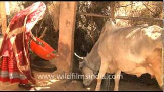 Download Woman fetches water from a well in Rajasthan Video