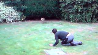 Download Wild fox and human playing Video