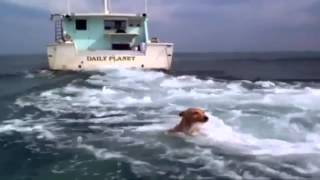 Download Dolphin and dog......True friendship! Video