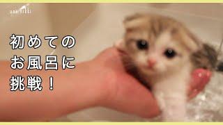 Download 子猫初めてのお風呂に挑戦 【うににっき #02】 Video