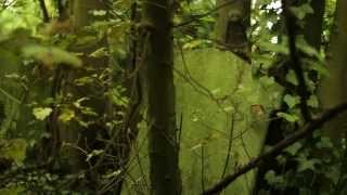 Download Nunhead Cemetery - one of London's most beautiful green spaces Video