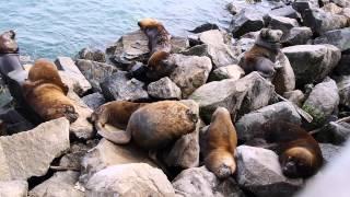 Download Puerto de San Antonio y sus Lobos Marinos, Chile, 2014 (1080p) Video