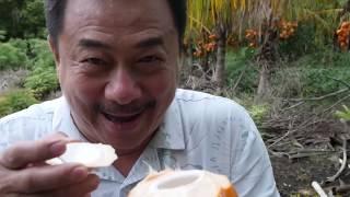 """Download """"NGƯỜI VIỆT TRÊN ĐẢO THẦN TIÊN- HAWAII"""" Tập 5- MC VIỆT THẢO- CBL(691)- May 31, 2018 Video"""