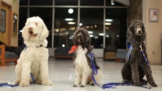 Download Therapy dogs take care of their people at West Virginia University Video