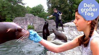 Download Als Tierpfleger im Zoo - Mara und die Tiere | Dein großer Tag | SWR Kindernetz Video