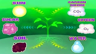 Download Photosynthesis, Leaf Structure & Function, Science Videos for Kids Video