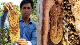 Download Harvesting Natural Honey Bee in Coconut Tree | Life of Natural Foods Video