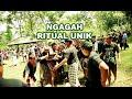 Download Ngagah Ritual Unik Di Bali - Prosesi Ngaben Masal Banjar Blungbang Bangli 2016 Video