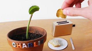 Download Mini TOAST for Charlie & Kluna! Video