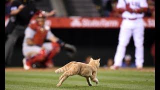 Download MLB: Animal Interference Video