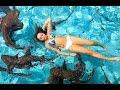 Download SWIMMING WITH SHARKS! | HeyItsSarai Video