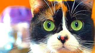 Download 8 Simple LifeHacks for Cats! Video