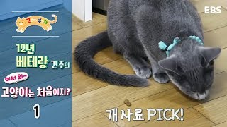 Download 고양이를 부탁해 - 12년 베테랑 견주의 어서와 고양이는 처음이지 #001 Video