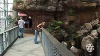 Download Preview Your Visit to the National Aquarium Video