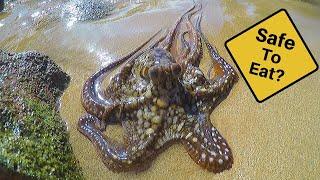 Download Catch n' Cook Octopus Video