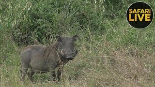 Download safariLIVE- Sunset Safari - October 1, 2018 Video