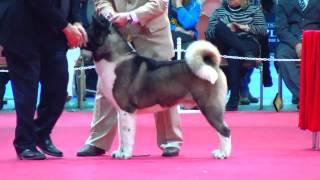 Download ″Perros en acción″ Exposición N° 234 Federación Cinológica Argentina Video