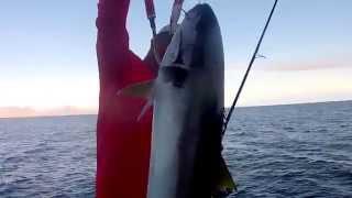 Download Pesca con poppers Isla San pedro Nolasco Video