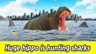 Download [EN] #80 Huge hippo is hunting sharks, kids education, learn sharks name, Collecta figureㅣCoCosToy Video