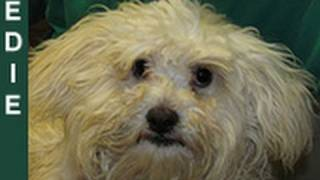 Download Edie - rescued an hour before euthanasia - Please share her story on Facebook/Twitter/Blog/MySpace. Video