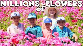 Download Giant Flower Maze Video
