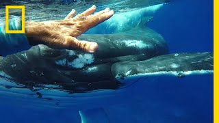 Download Was This Whale Trying to Save a Diver's Life? | National Geographic Video