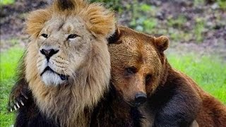 Download Unbelievable Unlikely Animal Friendships Compilation 2017 Video