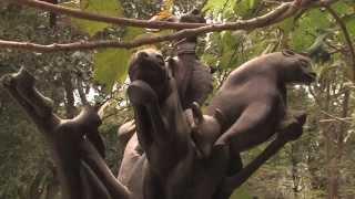 Download Gambie - croisière à la découverte du Monde (Documentaire, Découverte, Histoire) Video