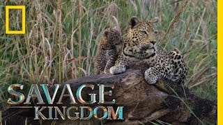 Download Welcome Home, Little Ones | Savage Kingdom Video