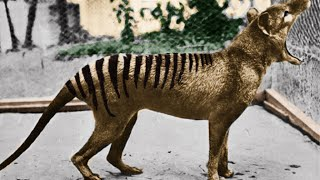 Download 3 Extinct Animals That May Still Be Alive Video