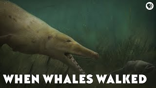 Download When Whales Walked Video