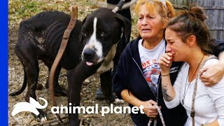 Download 38 Dogs Saved From Horrific Conditions | Pit Bulls & Parolees Video