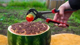 Download EXPERIMENT Glowing 1000 Degree BALL VS 10000 MATCHES VS WATERMELON Video