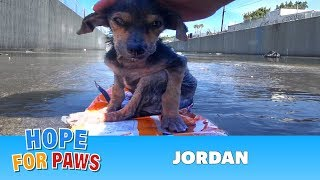 Download A brave little dog gets rescued from the river. His recovery with Hope For Paws will inspire you. Video