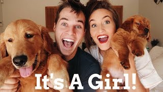 Download WE GOT ANOTHER PUPPY!!! Video